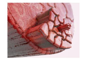 muscle detector skład, ulotka forum
